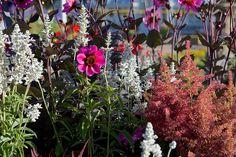 RHS Hampton Court Palace Flower Show / RHS Gardening