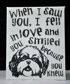 Saw you I fell In Love  Shih Tzu #ShihTzu