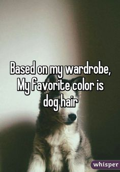 Dog Obedience Training: Based on my wardrobe, my favorite color is dog hair. Funny Animal Pictures, Funny Animals, I Love Dogs, Cute Dogs, Pet Sitter, Animal Quotes, Dog Care, Pet Grooming, Dog Mom