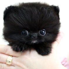 omg this is the cutest thing I have EVER seen <3