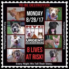 08/28/17 KILL LIST-NYC-8 DOGS TO BE MURDERED!! HELP SAVE A LIFE GOD WILL REWARD YOU GREATLY!! FOSTER OR ADOPT/SHARE PIN !!