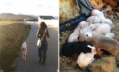 White Wolf : Dog With Broken Leg Leads Vets Two Miles To Her Puppies