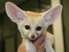 Small Pets Animal | and dogs, Animal Family Veterinary Care Center knows that exotic pets ...