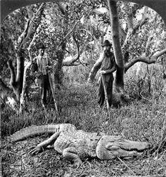 Awesome image.  1882 gator hunters.