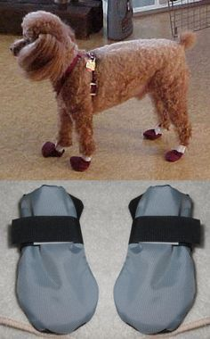 1000 Ideas About Dog Booties On Pinterest Dog Paws Dog