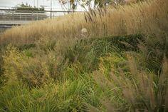 Grasses!  Sarah Price OGA-08_IMG_7336