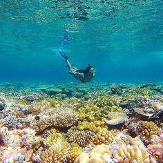 Hotels-live.com/pages/hotels-pas-chers - As a marine biologist @alyssa_adventuring absolutely loves being in the ocean but she has a particular soft spot for the #GreatBarrierReef can't say we blame her really! The diversity of marine life in this enorm