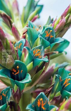#ClippedOnIssuu from Conde nast house & garden november 2015