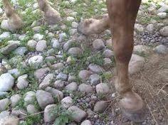 Billedresultat for pferde paddock paradise stationen