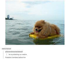 That dog looks so dang happy! :)