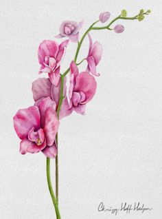 Original Watercolor - Orchids 8x10 #digitalpainting