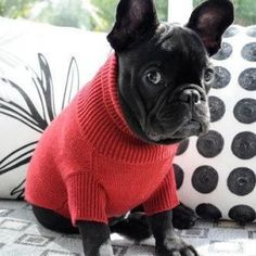 Aww, so sad about the sweater.