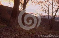 Sunset Winter Landscape Of Platanus Trees Stock Image - Image of pattern, autumn: 135971929 Winter Landscape, Free Stock Photos, Trees, Autumn, Sunset, Illustration, Pattern, Photography, Outdoor
