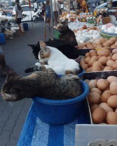 """Busy Cats Бизнес-холдинг """"Весь мир - коту под хвост"""" выходит на новый уровень..."""