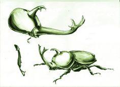 獨角仙 Allomyrina dichotomus