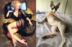 Арт-проект «Cats That Look Like Pin Up Girls».