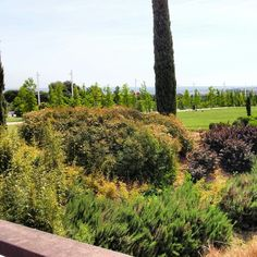 Parque Juan Carlos I. Madrid.