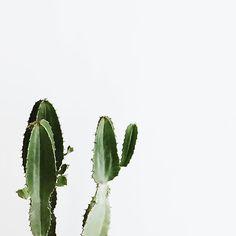 Jules & Jenn - mode responsable en toute transparence // Cactus • www.julesjenn.com