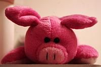 40/365 - Oink.