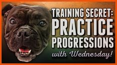 Dog training Secret - Progressions and Rehearsals are the KEY! Puppy Training Tips, Dog Training Videos, Cute Pomeranian, Service Dogs, Rescue Dogs, Dogs And Puppies, French Bulldog, Dog Cat, Pomeranians