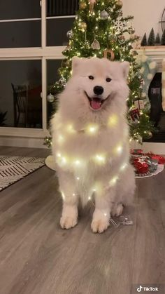 Cute Little Animals, Cute Funny Animals, Cute Cats, Merry Christmas Gif, Christmas Quotes, Cute Funny Babies, Funny Kids, Funny Parrots, Samoyed Dogs