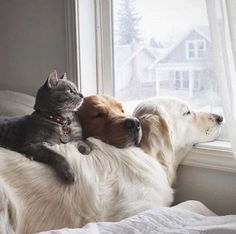 """My home, at times during my 46 years of animal assistance. The phrase is now termed """"Animal Rescue"""" but I feel that is too self-complimentary. Cute Kittens, Puppies And Kitties, Cute Cats And Dogs, I Love Dogs, Cute Puppies, Doggies, Cute Baby Animals, Animals And Pets, Funny Animals"""