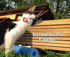 Funny Cat Memes, Funny Cats, Silly Cats, Stuffed Animals, The Funny, Lol, Pets, Tuxedo Cats, Tuxedos