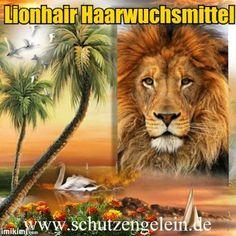 Top Haarwuchsmittel Lionhair, gegen Haarausfall Lionhair http://www.amazon.de/dp/B014MJ9XAC/ref=cm_sw_r_pi_dp_2jB4vb0G06KK7
