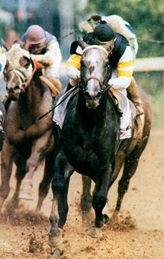 Holy Bull winning the 1994 Traverse