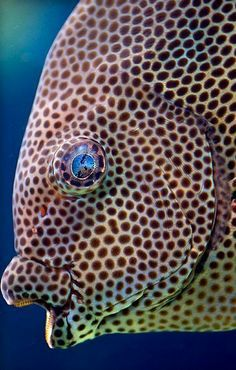 Spotted Fish Expression Photography