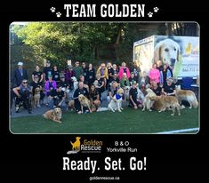 #ThrowbackThursday to when we took part in the B&O Yorkville 5K Run. Such a great event with some incredible people and pups! #goldenretriever #rescuedog #adoptdontshop #throwback Throwback Thursday, Rescue Dogs, Pup, Adoption, The Incredibles, Running, People, Animals, Foster Care Adoption