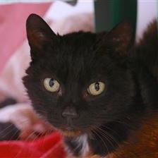 Suzie - Cat Rehoming & Adoption - Wood Green Animals Charity #charitytuesday #adoptdontshop