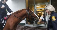Customers Were Shocked To See A Horse Raiding A Donut Shop (But For A Great Reason)