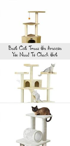 900 Cat Playgrounds Ideas Cat Playground Outdoor Cats Playground