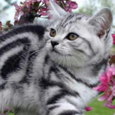 Gorgeous tiger cat