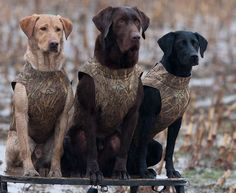 Hunting dogs, has to be the coolest thing ever