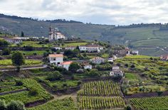 For the history and culture of the Douro wine region, visit the traditional Douro wine villages: Provosende, Ucanha, Trevões, Favaios, Barcos or Salzedas
