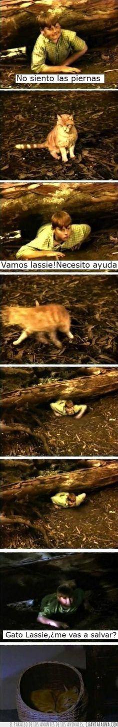 14772 - SI LASSIE - Hubiera sido un gato