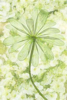 ❧ Couleur : Vert poudré ❧