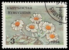 """Kyrgyzstan 34 Central Asian Flowers """"Daisies"""" PA22477 