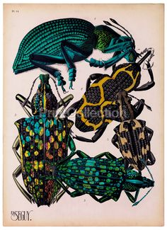 Insects, Plate 14