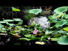Beautiful World, Pond, The Creator, Spirituality, Videos, Nature, Plants, Water Pond, Naturaleza