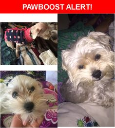 Please spread the word! Ruby was last seen in Daly City, CA 94014.