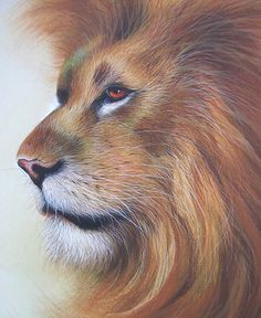 David Finney - Wildlife Artist & Illustrator | Animals