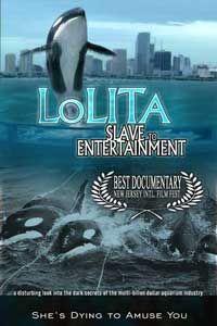 """""""O GRITO DO BICHO"""": Orca Lolita recebe proteção oficial no aquário de ... #ogritodobicho#falabicho"""