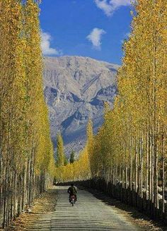 Have you ever seen a road flanked by tall trees in a great symmetry? If not, come to Pakistan. This is Absolutely Amazing and Fantastic View of Skardu-Khaplu Road.