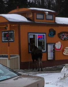 College Coffee House, Fairbanks... Only in Alaska