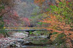 Naejang MT. South Korea
