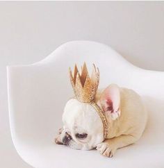 'The King', French Bulldog Cute Puppies, Cute Dogs, Dogs And Puppies, Doggies, Animals And Pets, Baby Animals, Cute Animals, Cute Creatures, I Love Dogs