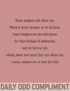 """Badger Care"" Daily Odd Compliment"